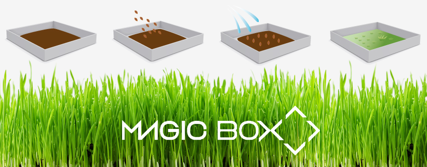 magic-box-postal-con-semillas-modo-de-funcionamiento-magicbox-adnstudio