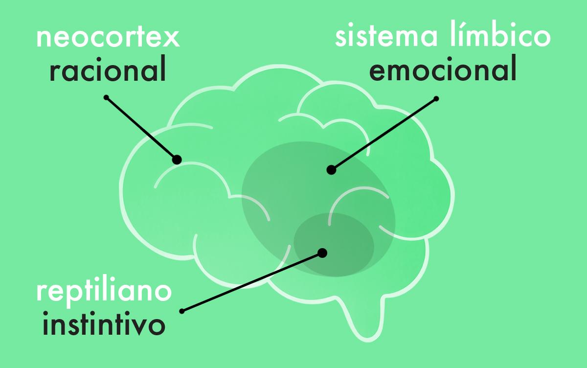 neurobranding cerebro